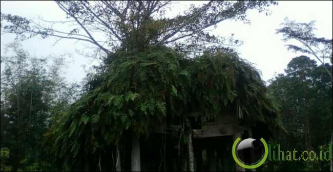 Pohon tumbuh di atap rumah tua