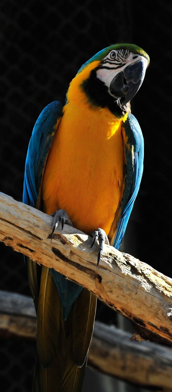Picture of a beautiful macaw.