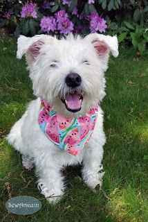 Pastel Watermelon Dog Bandana