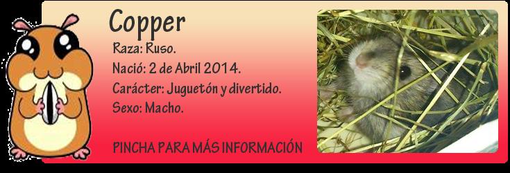 http://almaexoticos.blogspot.com.es/2014/05/copper-hastercin-en-adopcion.html