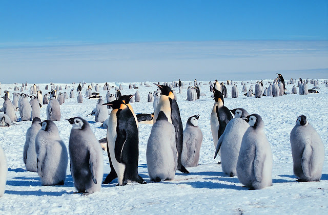Penguins, starfish, whales: Which animals will win and lose in a warming Antarctic?