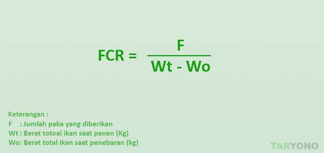 Cara Mudah Menghitung FCR Ikan Lele