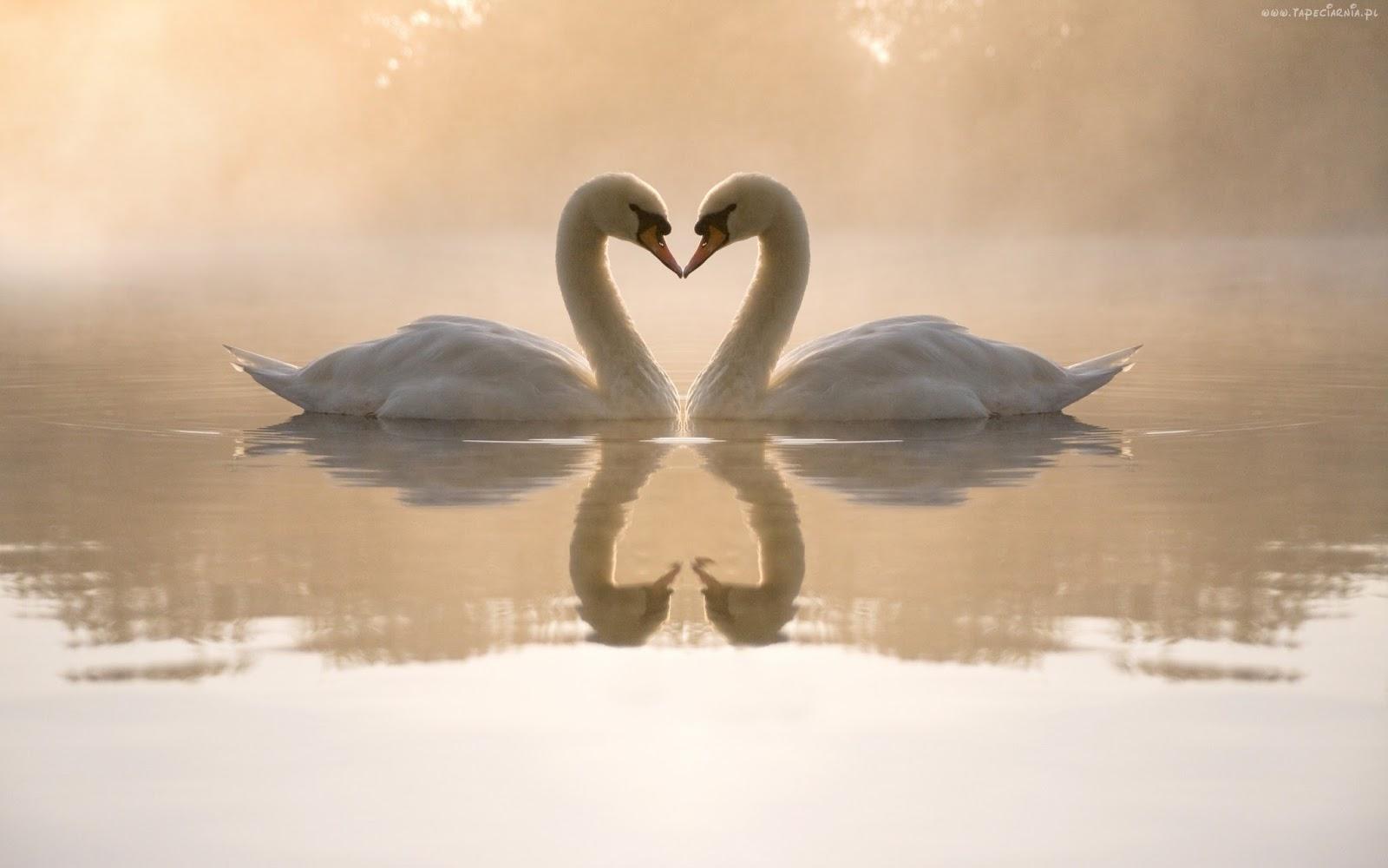 Wiersz O Miłości