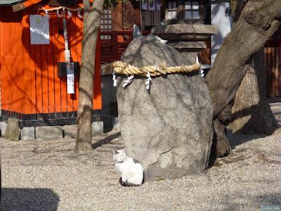 皇大神宮の猫