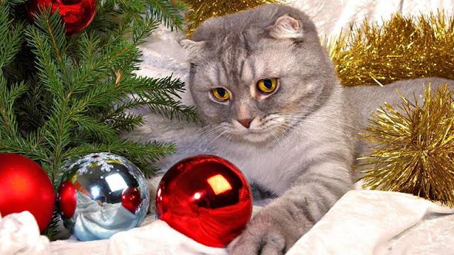 Fotos  gatos de gatos con árbol navidad