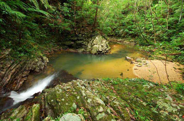 jungle stream, flowing water,rocks