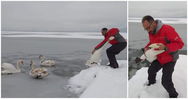 Εθελοντές αγνοούν τον κίνδυνο και σώζουν παγιδευμένα πουλιά στην παγωμένη λίμνη της Καστοριάς