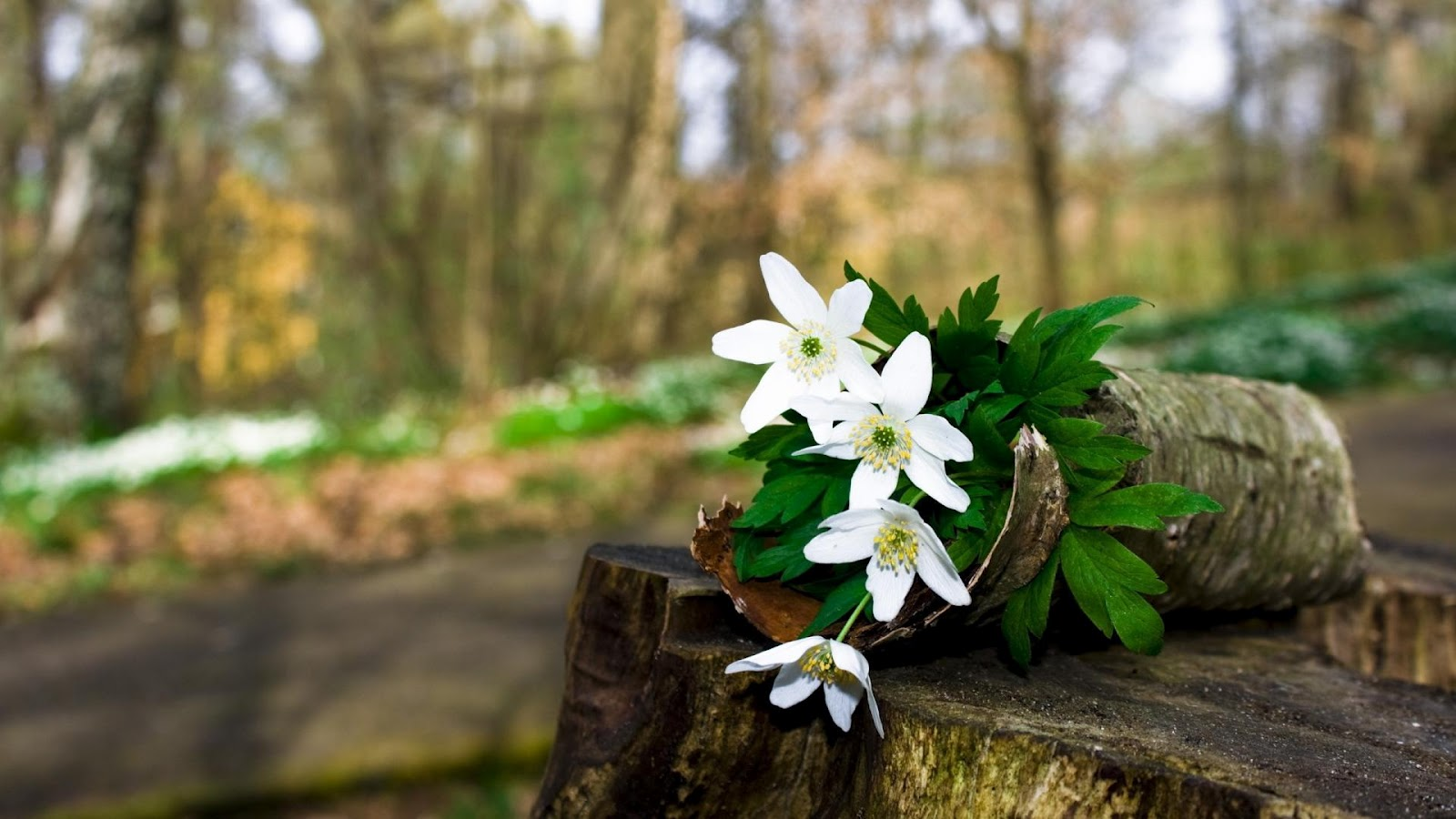White+Flowers+For+You.jpg