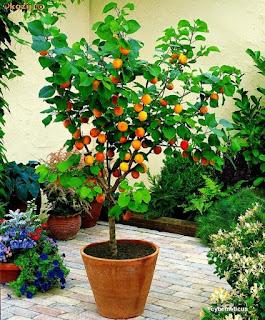 Studio floral dora santoro for Alberelli ornamentali