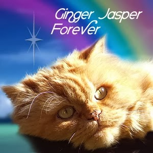 Fly free Ginger Jasper we love you