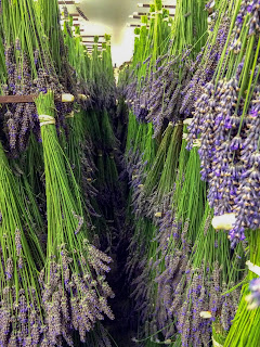 Drying Organic Lavender Bouquets at Pelindaba Lavender Farm