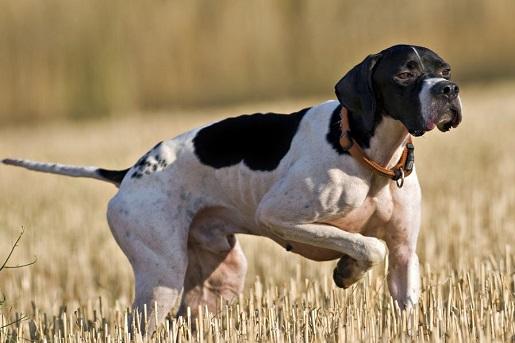 Pierwsza pomoc w nagłych wypadkach u psa