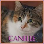 http://animaux76.blogspot.fr/2014/03/canelle.html