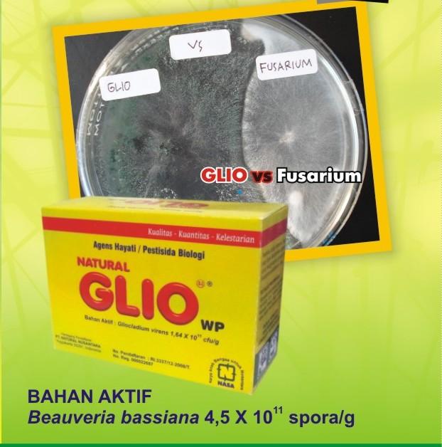 Agens Hayati Gliocladium - Pengendali Fusarium dan Jamur Akar Putih Paling Di Rekomendasikan