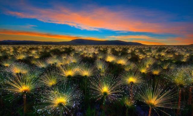 O nascer do Sol com os chuveirinhos na Chapada dos Veadeiros venceu o prêmio principal do Internacional Garden Photographer of the Year (Foto: Marcio Cabral)