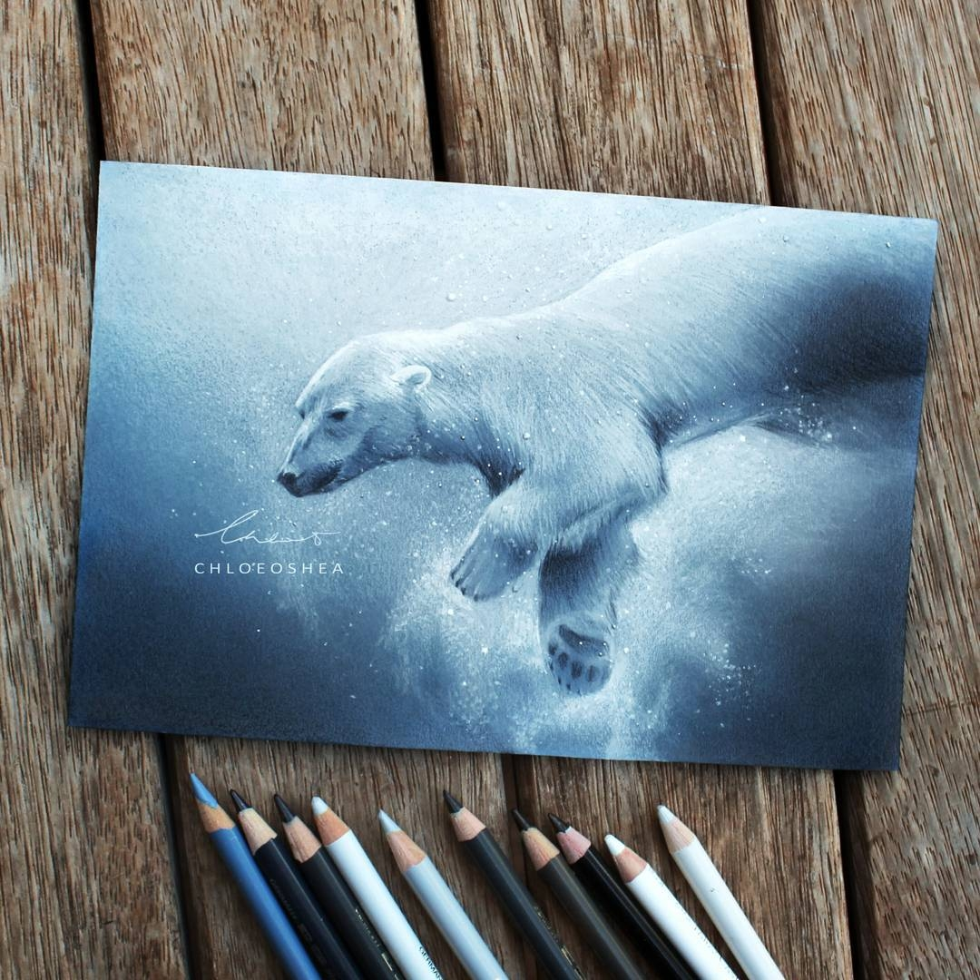 10-Polar-Bear-Chloe-O-Shea-Realistic-Wind-Animal-Drawings-www-designstack-co