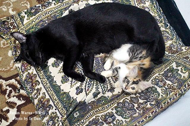 Kucing Adopsi