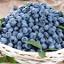 5 Manfaat Blueberry Untuk Kesehatan