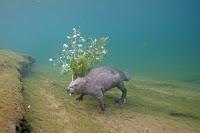 Wildlife Photographer of the Year castoro
