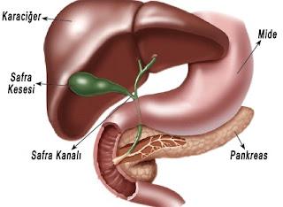 sindirime yardımcı organlar