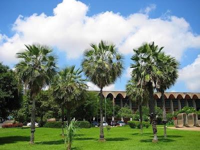Carnaúba é eleita árvore símbolo do Piauí com 49% dos votos