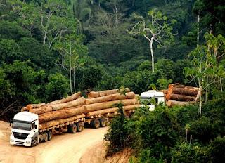 Empresas globais acusadas de importar madeira ligada ao massacre amazônico