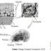 Penjelasan Tentang Anabolisme Karbohidrat