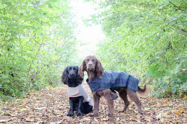 winter dog coats