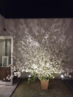 今年の店の桜