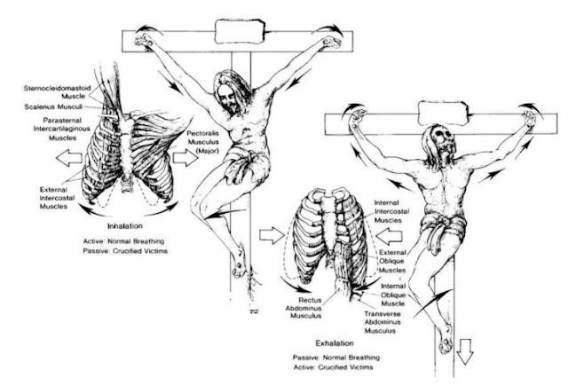 Detajet Anatomike dhe Psikologjike të Vdekjes nga Kryqëzimi