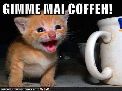funny-pictures-kitten-wants-coffee.jpg