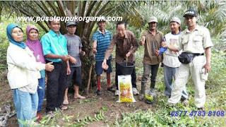 cara memperbanyak buah sawit, perkebunan sawit, peningkatan produksi sawit, perusahaan kelapa sawit, pabrik pengolahan kelapa sawit