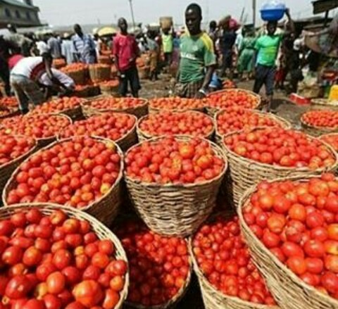 HOW TO BUY YOUR FRESH TOMATOES (#1500 PER BASKET)