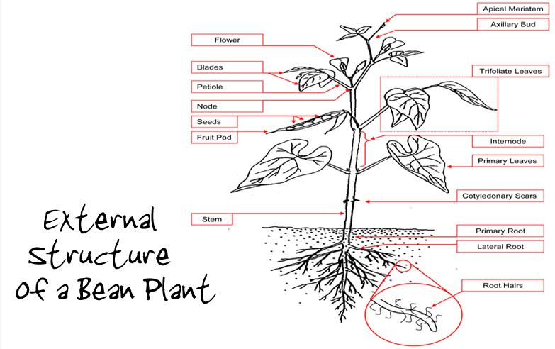 Baby Plants: April 2012