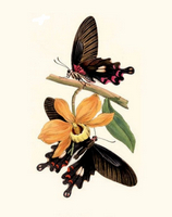 Пеперуди и орхидея
