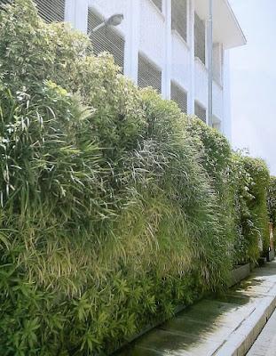 Tukang Taman Vertikal Surabaya | Vertical Garden 7
