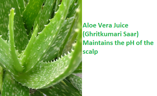 Aloe Vera Juice (Ghritkumari Saar) Maintains the pH of the scalp
