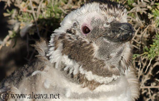 atardecer en las pingüineras de la patagonia