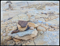 Cairns To Lead You Along Calf Creek Falls Trail Escalante National Forest Utah