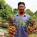 เกษตรกรนำเทคนิคใหม่ ใช้ฮอร์โมนผลไม้หมัก ปลูกลําไย ลูกดก ผลโต ช่อใหญ่