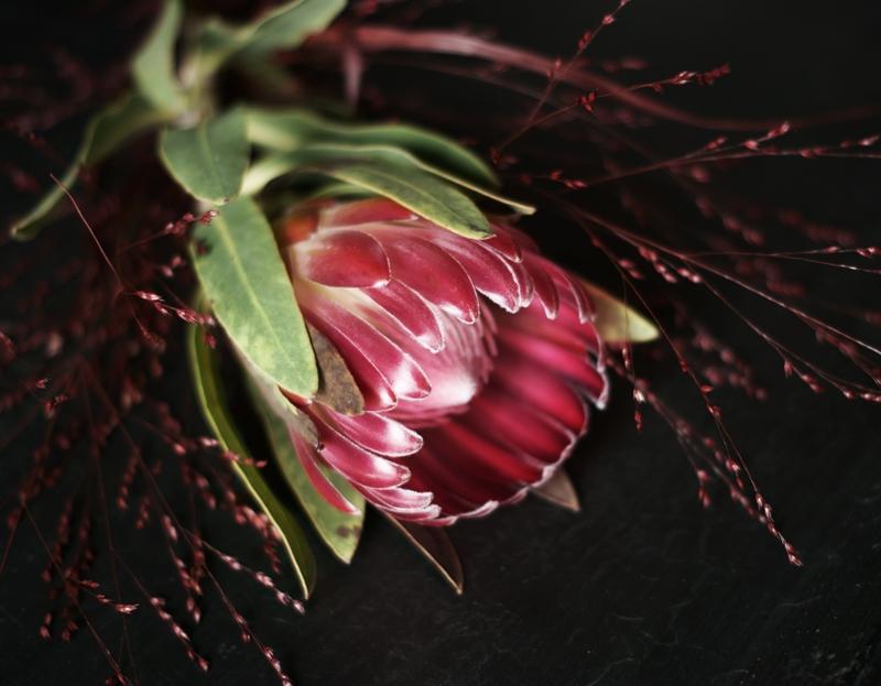 Blog + Fotografie by it's me! - Blüte einer Protea und rote Gräser