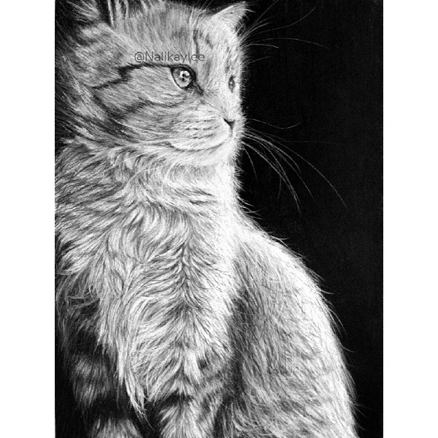 12-Cat-Kaylee-Yang-nalikaylee-Realistic-Drawings-which-Include-Animals-and-Objects-www-designstack-co