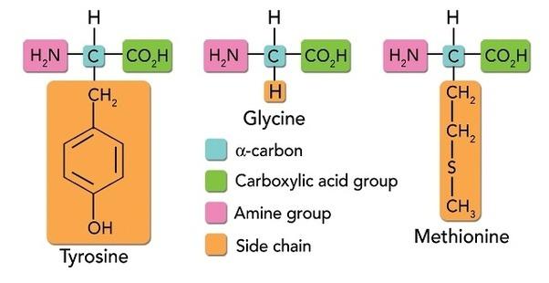 Collagen là gì ? Nguồn dinh dưỡng mà collagen mang lại