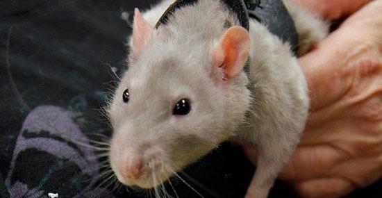 Ratos no avião 2