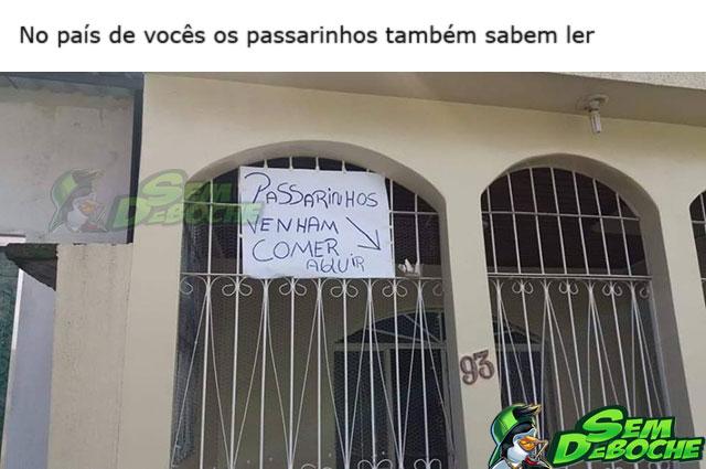 PASSARINHO ALFABETIZADO