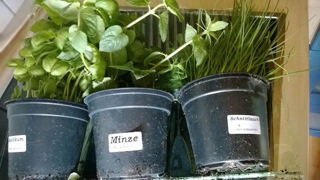Basilikum, Minze und Schnittlauch im Garten Topf