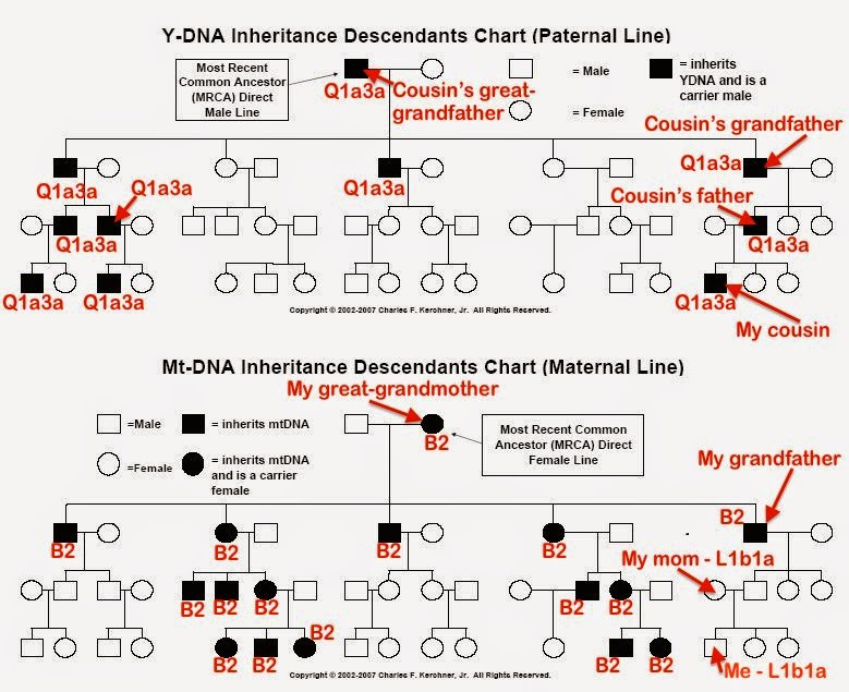 Roots & Recombinant DNA: NATIVE AMERICAN DNA Is Just Not That Into You