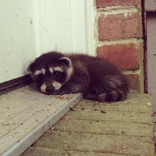 40 Heartwarming Pictures Of Animals - Coworker Found This Cute Guy Waiting On Her Doorstep This Morning