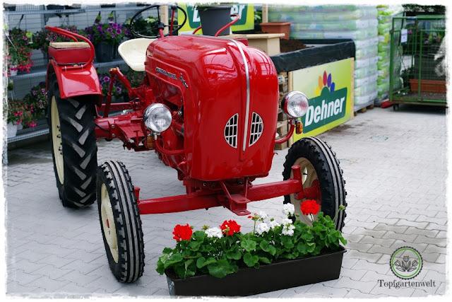 Gartenblog Topfgartenwelt Eröffnung Gartencenter Dehner Salzburg: Service Blumenkisterl bepflanzen