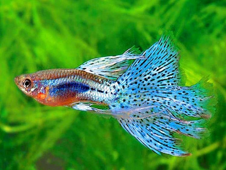 Tips Dasar Memulai Memelihara Ikan Hias di Akuarium ...